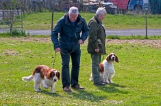 Welsh Springer Spaniel Club of South Wales - Have a Go Gundog Training - Day Two at Ffos-y-Fran, Incline Side, Mountain Hare, Merthyr Tydfil, CF48 4AH Courtest of Zoe Phillips